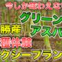【春限定!】グリーンアスパラ収穫体験タクシープランご予約受付中!
